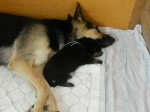 С мамой. Возраст щенка 2 недели.