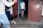 Социализация щенков ВЕО Лавбрил Барда и Лавбрил Баллады в возрасте 3 мес. Смело идут в незнакомую дверь.