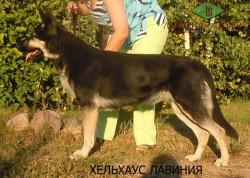 Хельхаус Лавиния