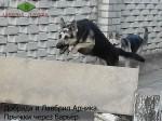 ВЕО Добрада (2 года) и Лавбрил Арника (7 мес.), прыжки через барьер.