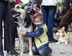 ВЕО Добрада, возраст 2 года. На выставке очень понравилась этому мальчику. Ему нравилось обнимать такую большую овчарку.