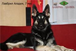 Лавбрил Аладея (5 месяцев)