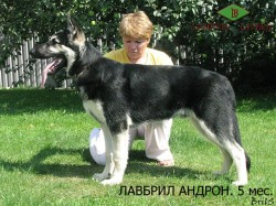 Лавбрил Андрон (5 месяцев)