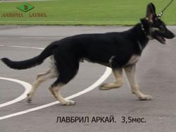 Лавбрил Аркай