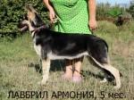 Лавбрил Армония (5 месяцев)