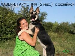 Юлия и ее Лавбрил Армония