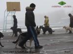 Леонид с  Лавбрил Альвинией (9 мес)  на занятиях по дрессировке