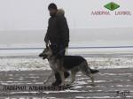 Леонид и Лавбрил Альвиния на занятиях по дрессировке