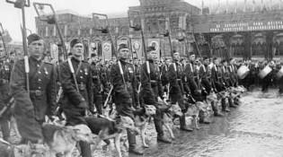 Собаки на Параде Победы