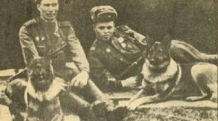 Справа овчарка Дина с вожатым А.Филатовым