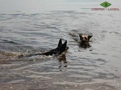 Лавбрил Аладея  и Муза. Игры в воде.
