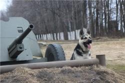 Сол на фоне военной техники.