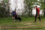 ВЕО Лавбрил Баллада, возраст 12 мес. Обучение движ-ю рядом при отвлекающем факторе.