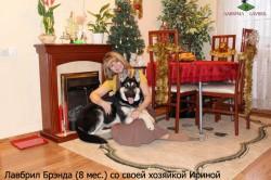ВЕО Лавбрил Брэнда (возраст 8 мес.) со своей хозяйкой Ириной.