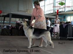 ВЕО Лавбрил Арника, ЦАЦИБ 02.06.12. Минск.