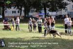 ВЕО Лавбрил Арника на Региональной выставке собак, г.Лида, 17.08.13г. Ринг.
