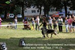 ВЕО Лавбрил Арника на Региональной выставке собак, г.Лида 17.08.13г. Ринг.