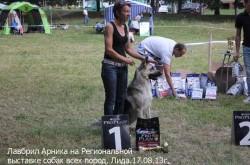 ВЕО Лавбрил Арника на Региональной выставке собак в г.Лида 17.08.13г. Хендлер Абрамович Е.