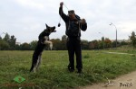 Щенок ВЕО Лавбрил Бард 4,5 мес. На занятиях с  А.Шкляевым. Прыжки.