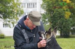 Щенок ВЕО Лавбрил Бард  (4,5 мес.) на дрессировке с А. Шкляевым.