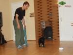 Тестирование щенка ВЕО в 7 недель. Реакция на громкий звук.