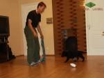 Тестирование щенка ВЕО в 7 недель, реакция на громкий звук.