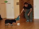 Тестирование щенка ВЕО возрастом 7 недель.
