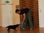 Тестирование щенка ВЕО. Возраст 7 недель.
