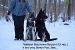 Щенок ВЕО Властелин Ветров (возраст 4,5 мес.) и его отец Бомон Росс Зевс.