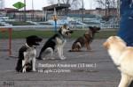 ВЕО Лавбрил Альвиния в группе собак на дрессировке