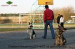 ВЕО Лавбрил Альвиния, в группе собак на дрессировке.