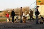 ВЕО Лавбрил Альвиния, в группе собак на дрессировке