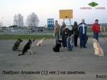 ВЕО Лавбрил Альвиния в группе собак на занятиях.