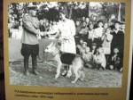Фото с выставки  служебных собак 1945 года.