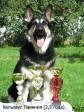 ВЕО Хельхаус Лавиния, фото с кубками. Возраст 2,5 года