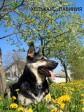 ВЕО Хельхаус Лавиния, весенний портрет. Май 2011.