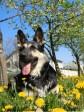 ВЕО Хельхаус Лавиния, весенний портрет. Май 2011г.
