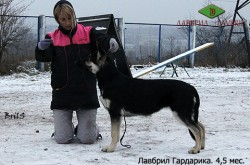 Щенок ВЕО Лавбрил Гардарика (4,5 мес.). Дрессировщик Савицкая Ю. Хендлинг.