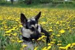 ВЕО Лавбрил Гардарика (10мес.). Весна...