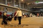Лавбрил Гордан (4,5 мес.) на БЕСТбеби Респ. выст. всех пород 07.12.14.
