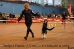 Лавбрил Лавбрил Гордан (4,5 мес.) с Ю.Савицкой в ринге 07.12.14
