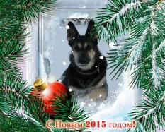 С Новым 2015 годом фото в рамке сосны с Лави