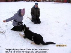 ВЕО Лавбрил Гранд Ларри на семинаре с В.Большаковой