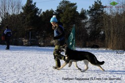 Щенок ВЕО Лавбрил Гардарика (5,5 мес.) на занятиях с Н.Кузнецовой. Хендлинг. Бег.