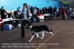 Щенок ВЕО Лавбрил Гардарика (6 мес.) в ринге. Хендлер Н.Кузнецова 08.02.15..
