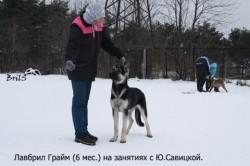 Щенок ВЕО Лавбрил Грайм (6 мес.) с Ю.Савицкой.