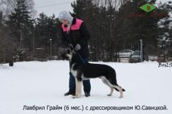 Щенок ВЕО Лавбрил Грайм. 6 мес. с Ю.Савицкой. Хендлинг.