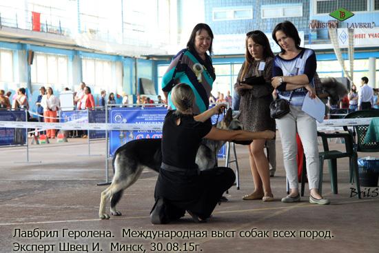 ВЕО Лавбрил Геролена, 13 мес. Минск, ЦАЦИБ. 30.08.15.