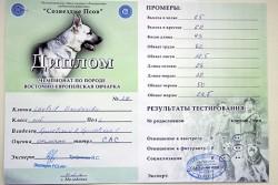 Диплом Лавбрил Гардарики с Чемпионата ВЕО. 21.05.16.