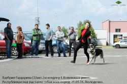ВЕО Лавбрил Гардарика и хендлер Е. Коликова в ринге.21.05.16.